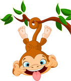 Monkey hamming. Cute baby monkey hamming on a tree. Perfect for April Fools' Day Royalty Free Stock Photo