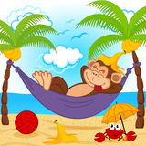 Monkey on hammock Stock Photo