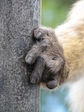 Monkey hand - detail Royalty Free Stock Photography