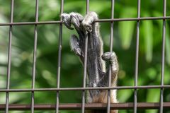 Monkey hand in the fence. A monkey hand in the fence tokyo zoo jail stock photography