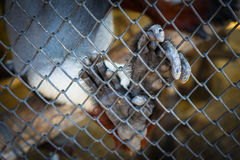 Monkey hand fingers in metal net . selective focus royalty free stock photography
