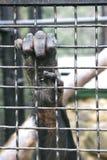 Monkey hand grabbing bars Stock Image