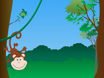 Monkey hanging. A monkey hanging in a tree in the jungle Royalty Free Stock Images