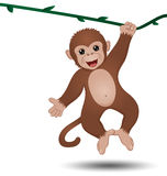 Monkey hanging on a branch Royalty Free Stock Photography