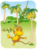 Monkey hanging from a ivy Royalty Free Stock Image
