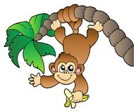 Monkey hanging on palm tree Royalty Free Stock Images