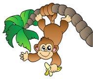 Monkey hanging on palm tree Royalty Free Stock Images