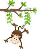 Monkey Hanging From a Tree Royalty Free Stock Photos