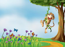 A monkey hanging on a vine plant Stock Photo