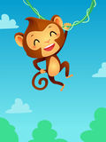 Monkey hanging on a vine Stock Photography
