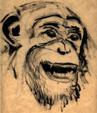 Monkey head. Illustration, detail chimpanzee, monkey head, charcoal drawing and painting black colour Royalty Free Stock Image