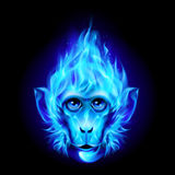 Monkey head in fire Royalty Free Stock Images