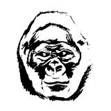 Monkey head (graphics) - gorilla Royalty Free Stock Image