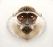 Monkey head illustration Royalty Free Stock Images