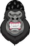 Monkey head mascot Stock Photos