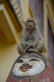 Monkey on a head Royalty Free Stock Photography