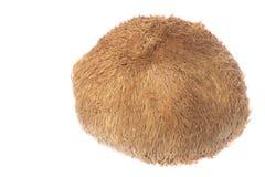 Monkey Head Mushroom Isolated Stock Photos