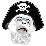 Monkey head in a pirate hat with a skull and crossbones - Royalty Free Stock Image