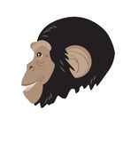 Monkey head in profile Royalty Free Stock Image