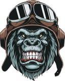 Monkey in helmet pilot. Vector illustration, the head of a gorilla wears a pilot`s helmet, on a white background vector illustration