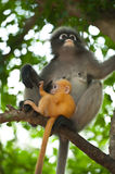 Monkey and her baby Stock Image
