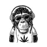 Monkey hipster with dreadlocks in headphones, sunglasses and t-shirt Stock Photography