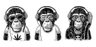 Monkey hipster with dreadlocks in headphones, sunglasses and t-shirt. Thre Monkey in headphones. Hipster with dreadlocks, rocker, rastaman. Vintage black Royalty Free Stock Image