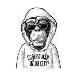 Monkey hipster dressed in hoodie with lettering coolest man in the city. stock illustration