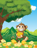 A monkey holding a banana in the forest Stock Images