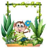 A monkey holding a flower Royalty Free Stock Photo
