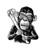 Monkey holding tibia. Vintage black engraving. Illustration for poster and t-shirt design. Isolated on white background. Hand drawn design element Stock Image