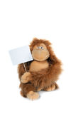 Monkey holding a white card Royalty Free Stock Photo