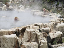 Monkey in Hot Spring Royalty Free Stock Image