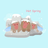 Monkey with hot Spring Stock Photos
