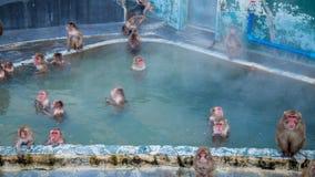 Monkey in hot spring tub or call Monkey onse. N in winter season at Tropical Botanical Garden, Hakodate, Hokkaido, Japan royalty free stock images