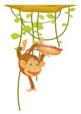 Monkey with a hotdog Royalty Free Stock Image