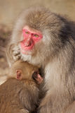 Monkey Hugging Baby Royalty Free Stock Photo