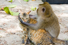 Monkey hugging cat Royalty Free Stock Image