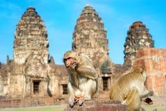 Monkey il tempio Fotografia Stock