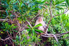 Monkey a ilha em Cat Ba, baía longa do Ha na silhueta de Vietname Foto de Stock Royalty Free