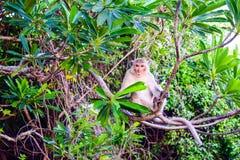 Monkey a ilha em Cat Ba, baía longa do Ha na silhueta de Vietname Foto de Stock Royalty Free