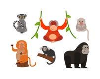 Monkey  illustration Royalty Free Stock Images