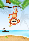 Monkey on the Island Stock Photos