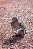 Monkey Island royalty free stock photos