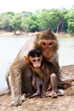 Monkey with its baby Royalty Free Stock Photos