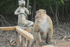 Monkey and its monument Royalty Free Stock Photography