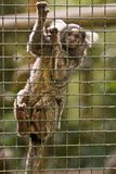 Monkey in a jail. Monkey Jail Prisioner Zoo Titi Stock Photo