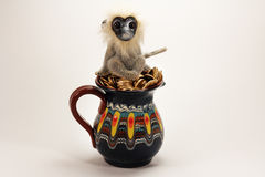 Monkey on the jug with gold coins Stock Photos