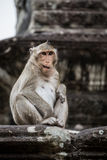 Monkey jugar y divertirse en el templo de Ankor Wat. Imágenes de archivo libres de regalías