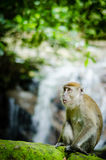 Monkey in jungle. A big monkey resting on rock Royalty Free Stock Photos